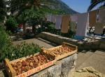 dalmatyńskie figi